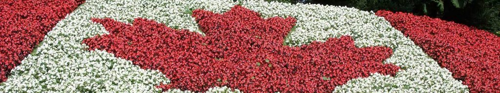 Canada Flag Flowers - Feature