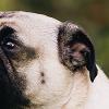 Dog Friendly Ornamental Grasses - Feature
