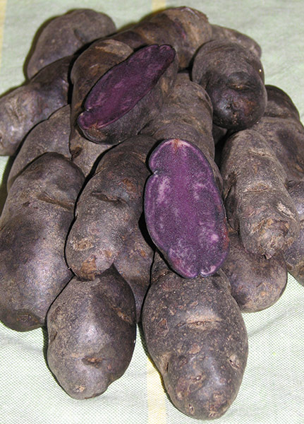 Violet Queen - Gourmet Seed Potatoes - Purple