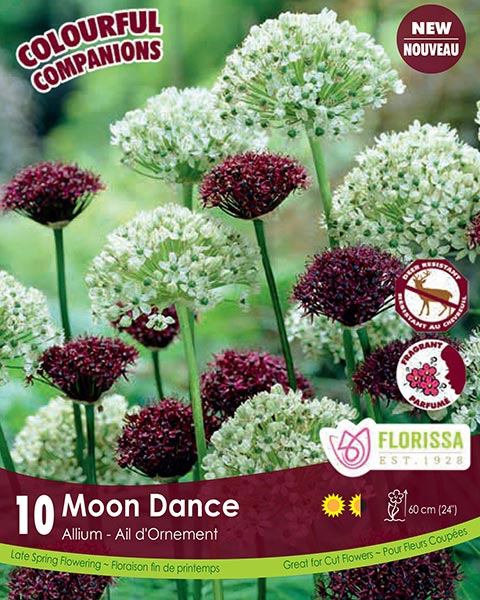 Moon Dance - Deer Resistant Alliums
