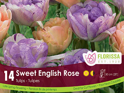 Sweet English Rose - Tulips - Florissa's Choice 2018 - Cover