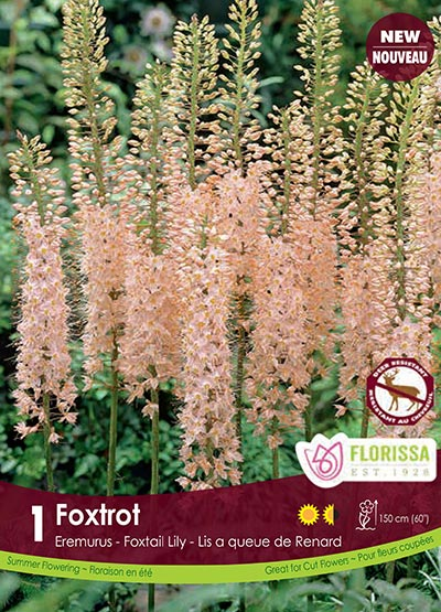 Eremurus Foxtrot - Fall 2018: Deer Resistant Bulbs