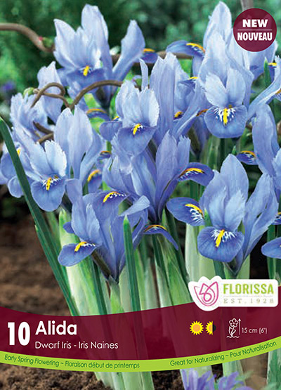 Iris Alida - Fall 2018: Deer Resistant Bulbs