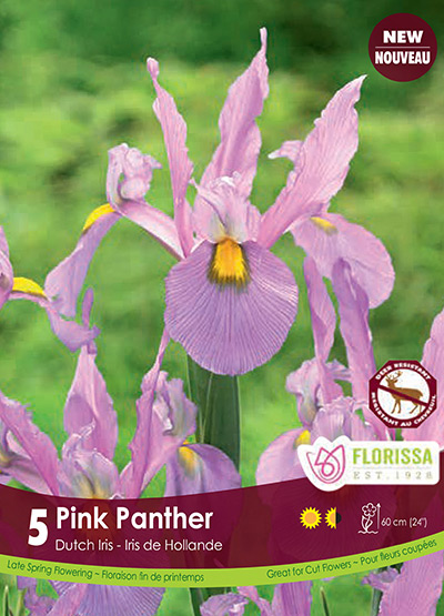 Iris Pink Panther - Fall 2018: Deer Resistant Bulbs