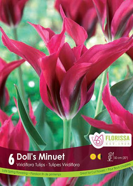 """Tulip """"Doll's Minuet"""""""