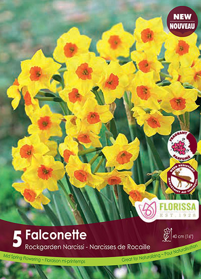 Narcissus Falconette - Fall 2018: Deer Resistant Bulbs