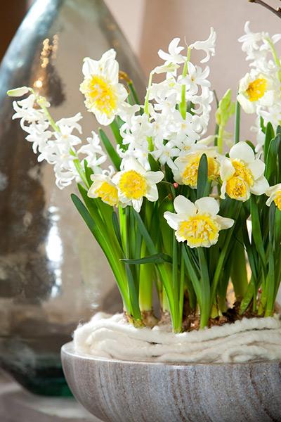 White Festival Hyacinths