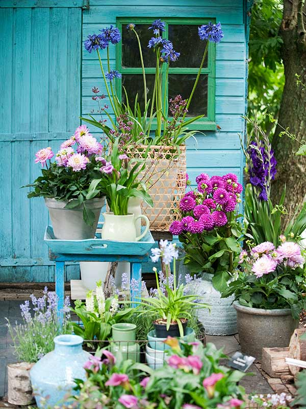 Eucomis Dahlia Gladiolus Calla - Mix Garden