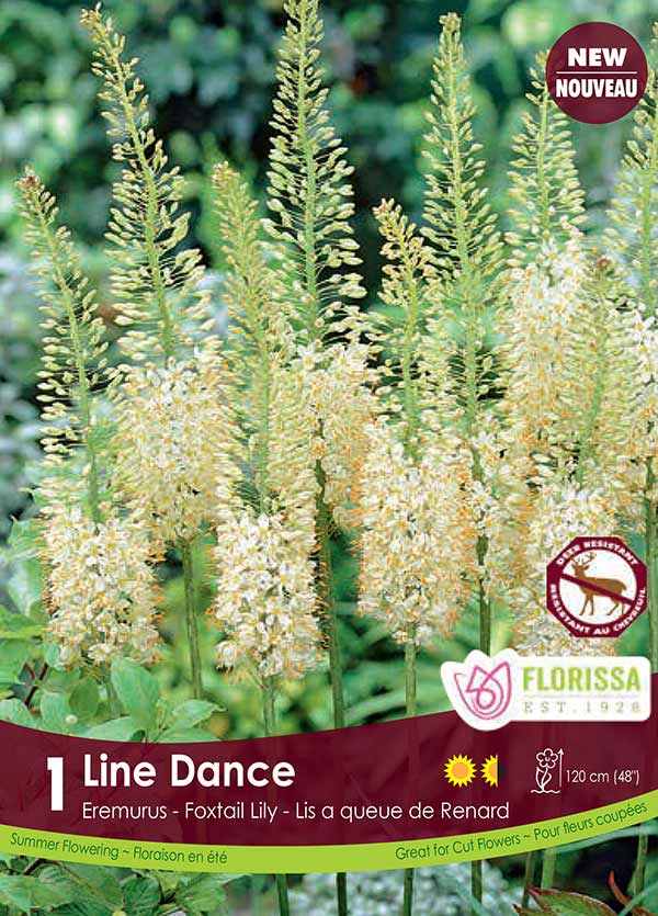 Line Dance - Eremerus