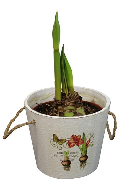 Vintage Botanical Amaryllis Gift Kit