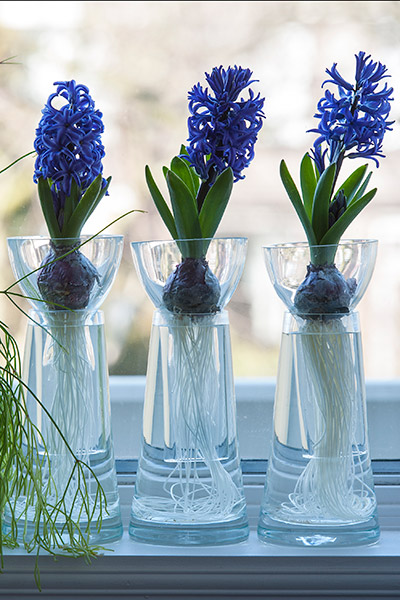 Hyacinthus on Glass - Step 3
