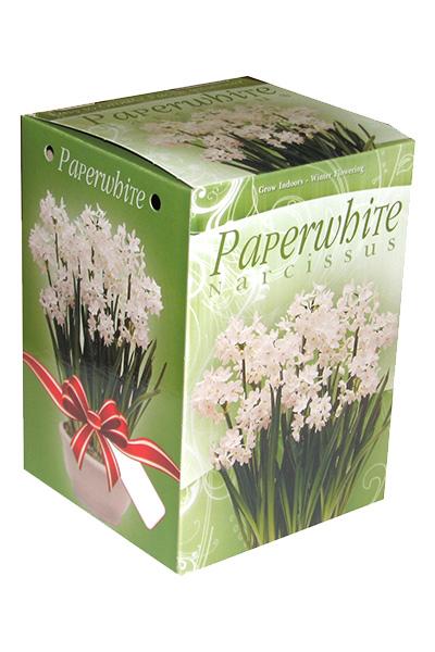 New Green Paperwhite Box