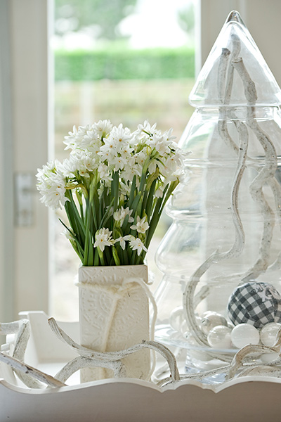 Paperwhites in Vase on Table