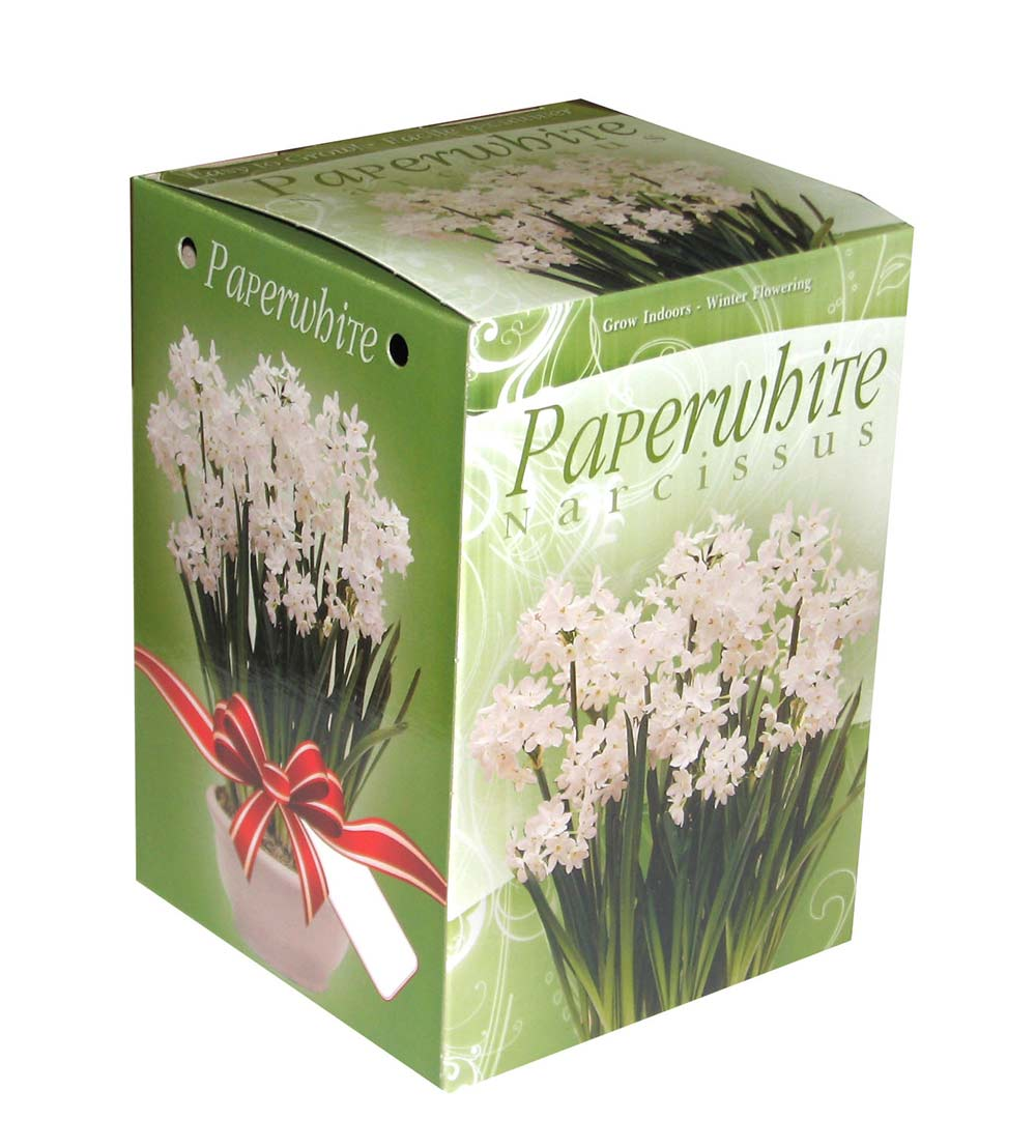 Green Box Paperwhite