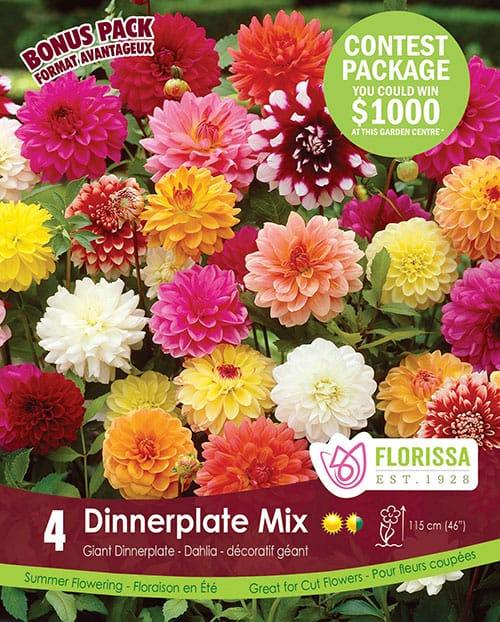 Special Marked Package - Spring 2019 Contest - Dinnerplate Mix