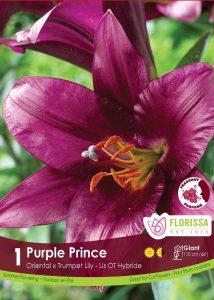 Lily Purple Prince